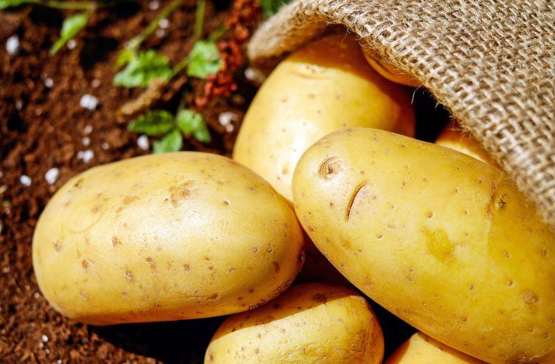 Arrivano le patate novelle nel mese di maggio