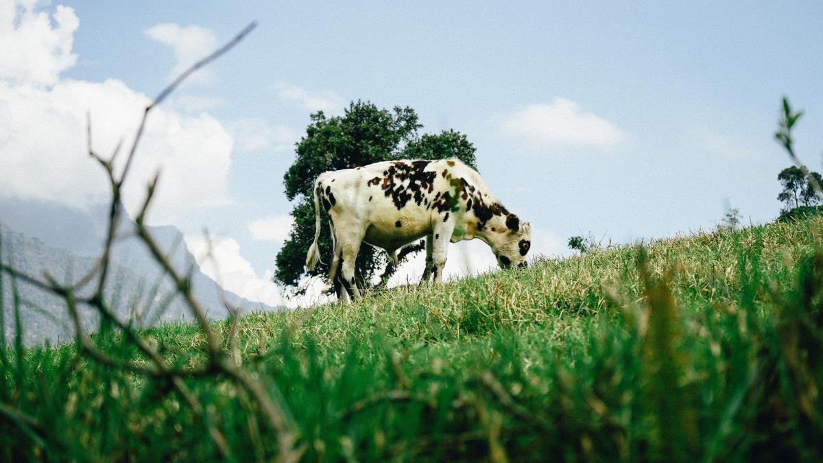 Carrefour a favore dell'agricoltura e dell'allevamento sostenibile