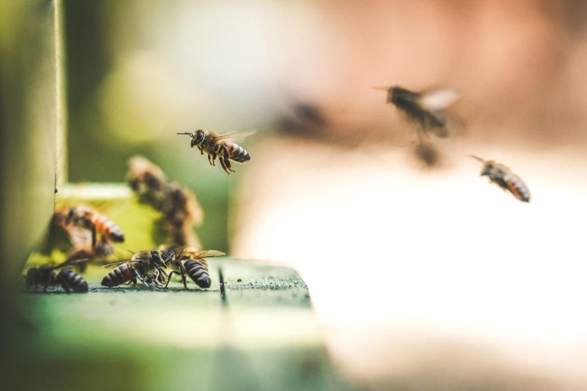 Anche Carrefour dalla parte delle api e dell'agricoltura sostenibile