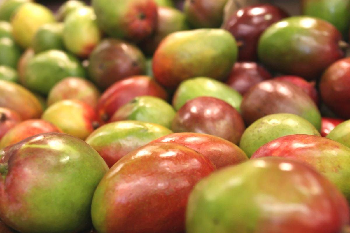 Le proprietà nutrizionali e i benefici del mango