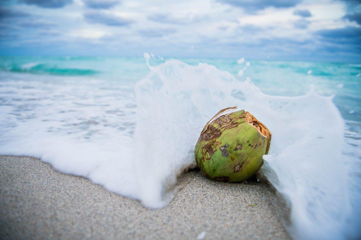 Le proprietà nutritive del cocco