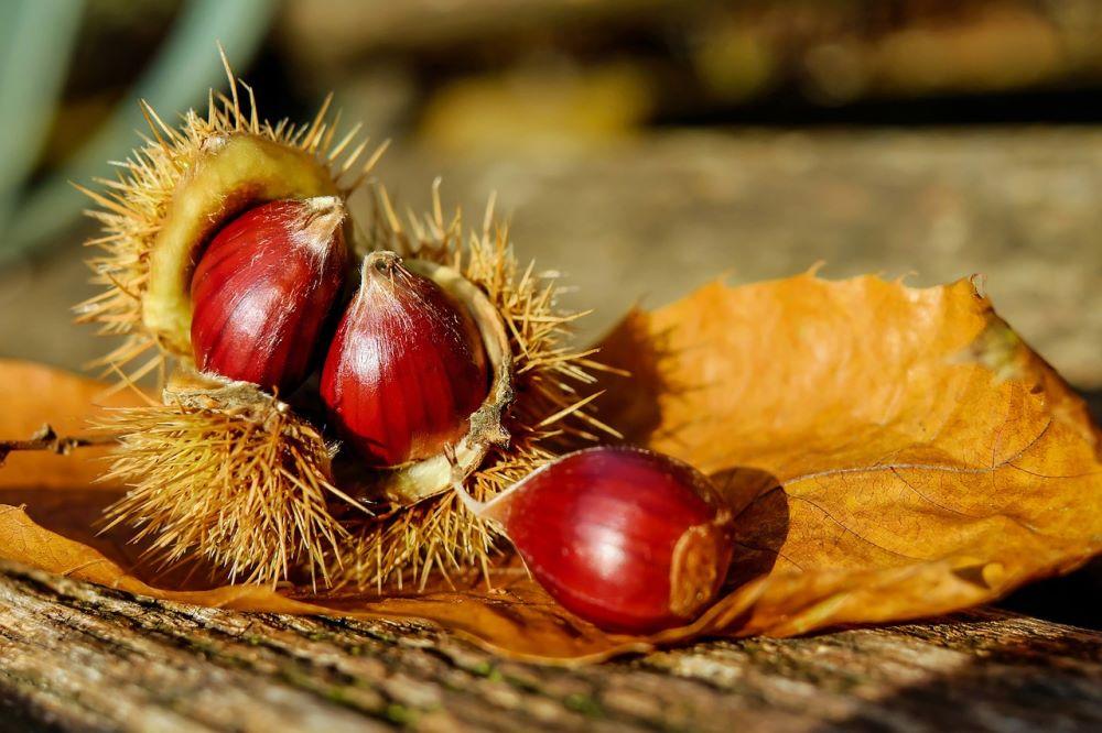 Le castagne, di stagione a ottobre