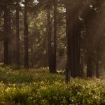L'impegno di Carrefour per la salvaguardia delle foreste