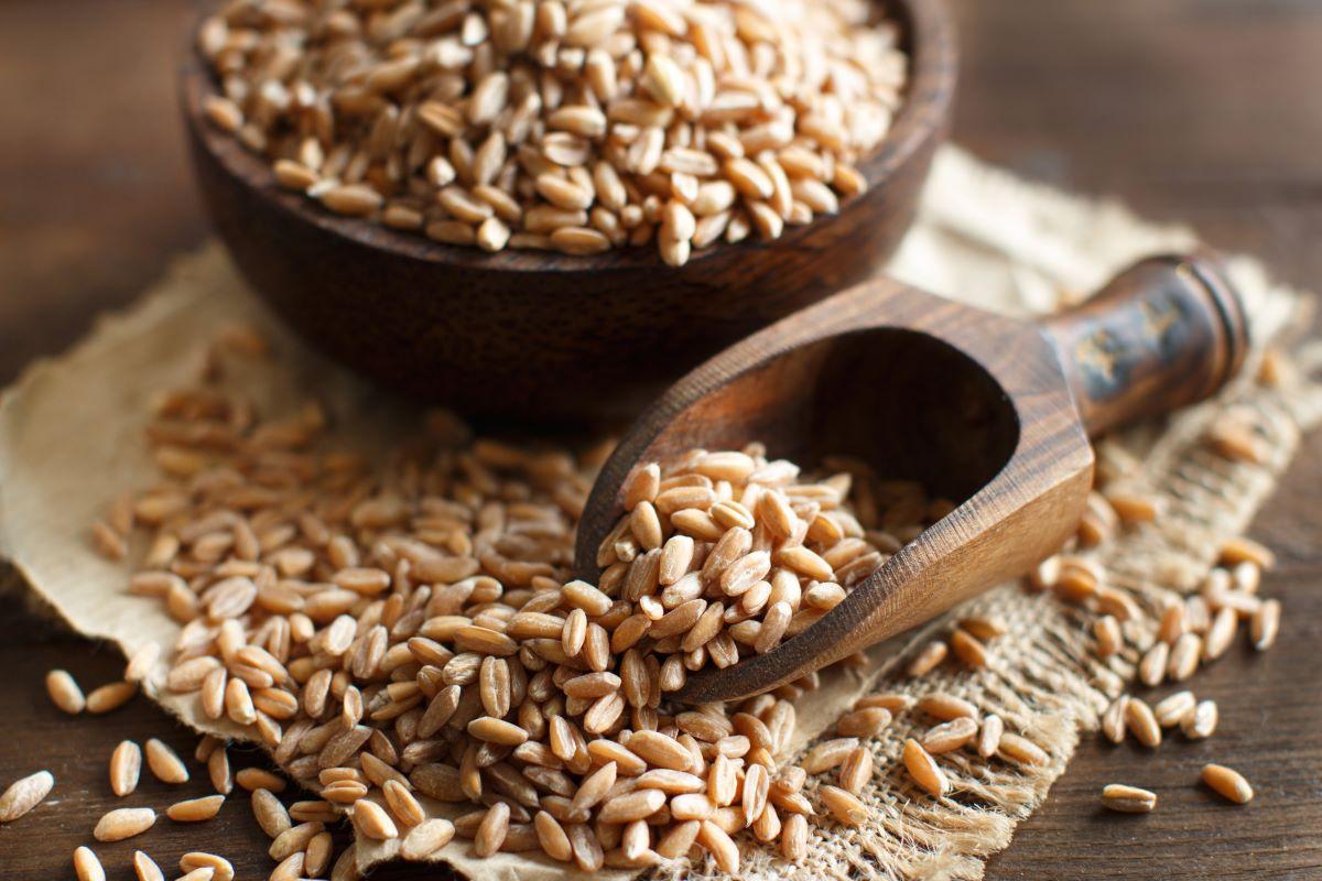 Farro, proprietà nutrizionali e usi in cucina
