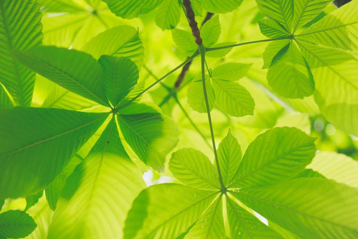Coop e la sostenibilità ambientale