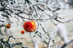 Frutta e verdura di stagione a gennaio