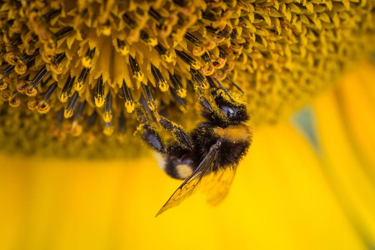 Tipi di miele: qual è il migliore?
