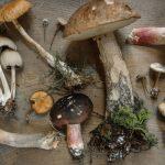 Funghi: proprietà, benefici e controindicazioni