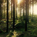 600 alberi per i boschi di Asiago da parte di Pam Panorama