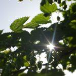 Primo bilancio di sostenibilità per Bennet