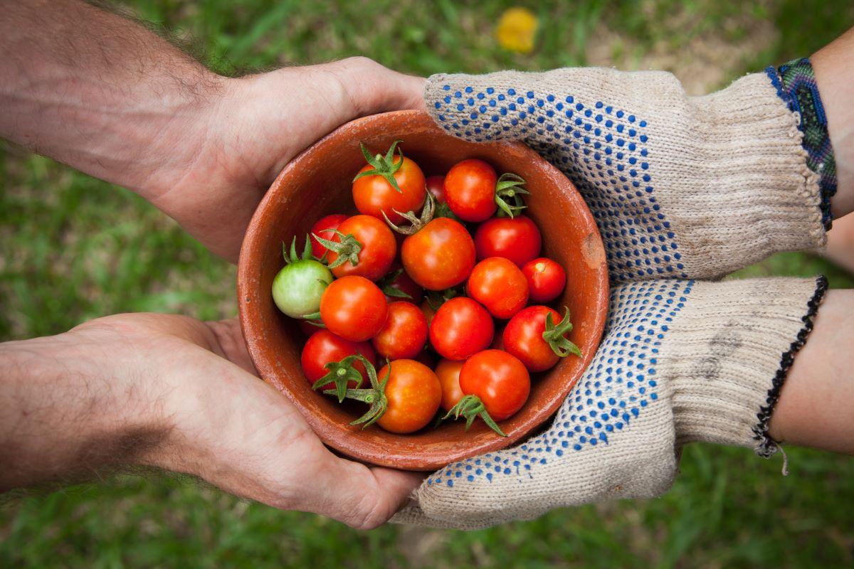 Lidl, in arrivo il primo standard di biodiversità per l'agricoltura ortofrutticola