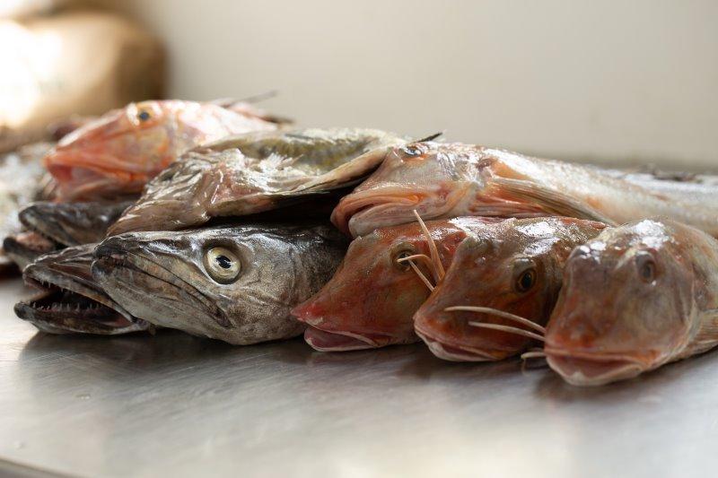 Dieta pescetariana, pesce di stagione
