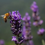 Ogni ape conta: al via la campagna Coop