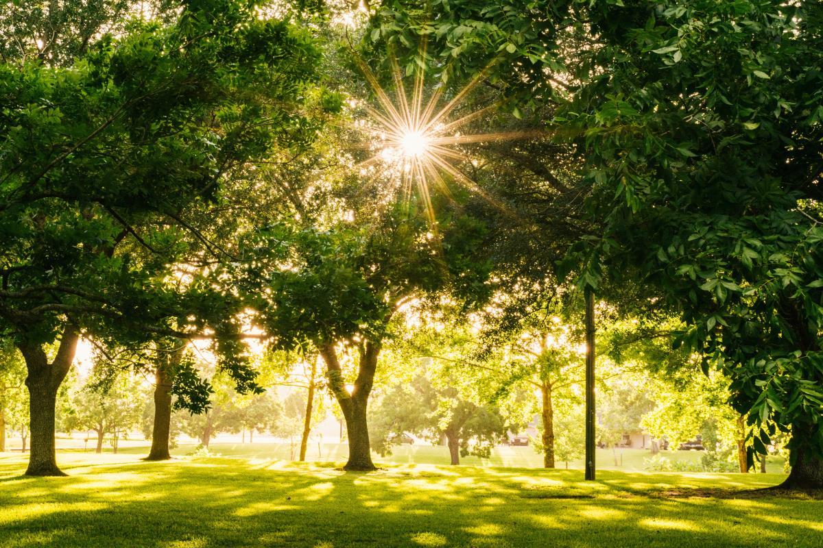 Pam Panorama per il verde in città