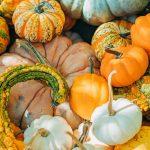 Tipi di zucca, tutte le varietà commestibili