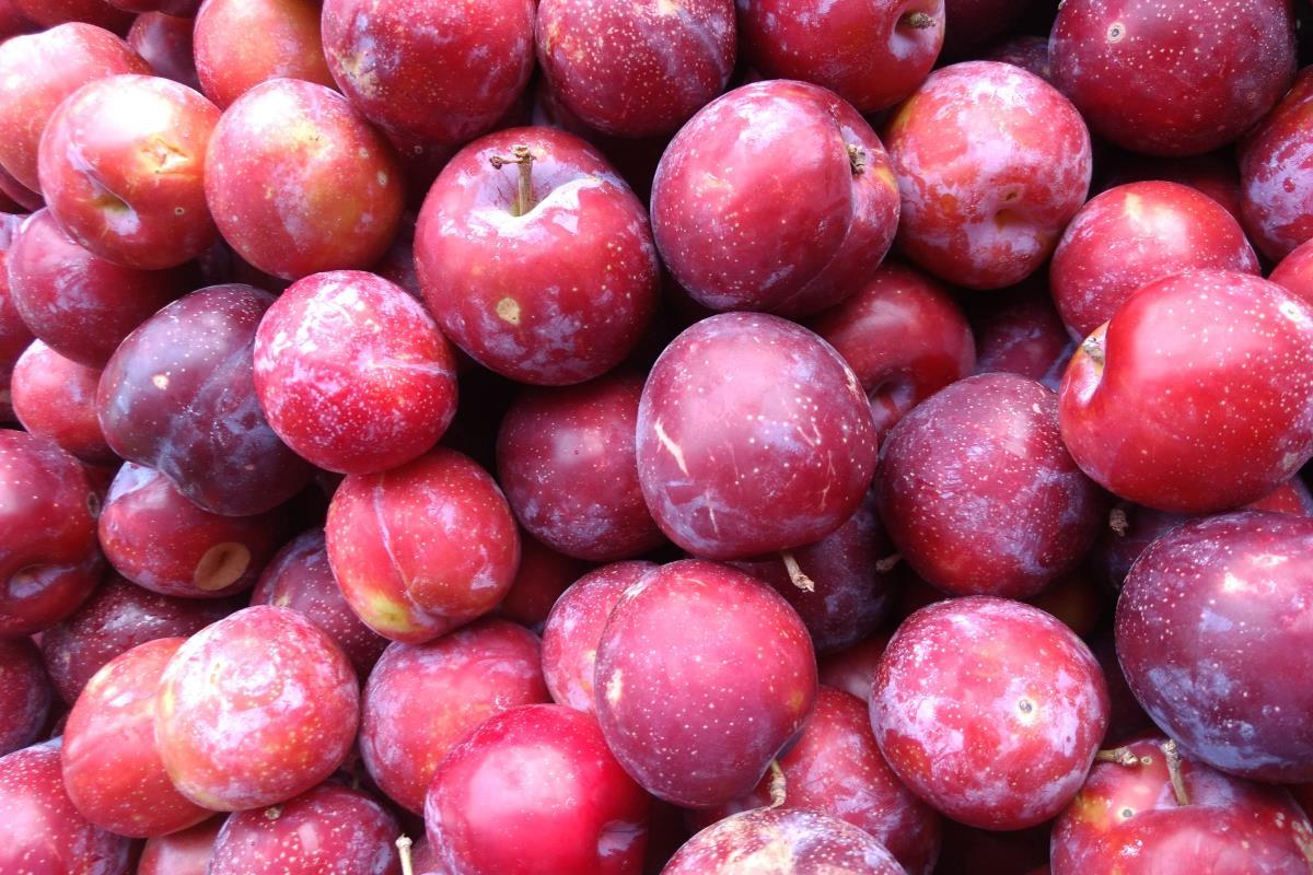 Prugne: calorie, proprietà e valori nutrizionali