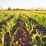 Farm to Fork strategy: Coop ed Esselunga tra i firmatari del nuovo Codice di Condotta Europeo