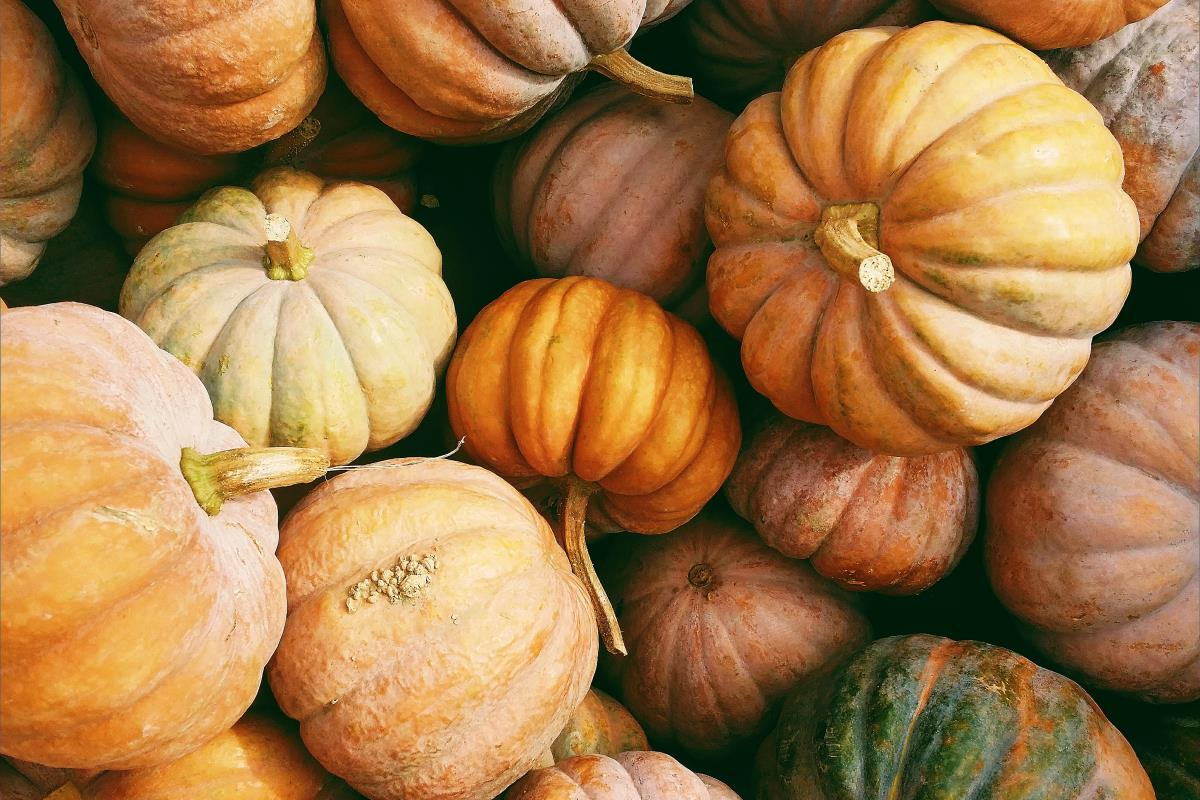 Verdura gialla e arancione, elenco e caratteristiche