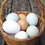 I tipi di uova da usare in cucina (non solo gallina)